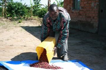 Oegandese koffieboer van het Fortune koffieproject