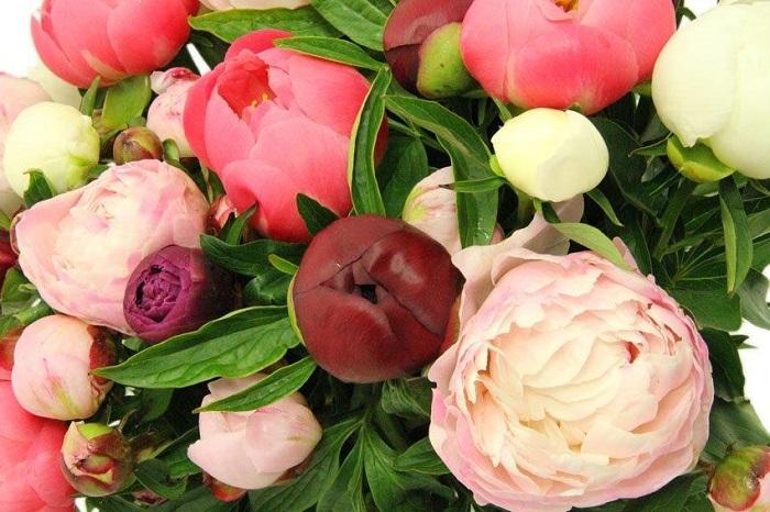 Tofbloemen-boeket